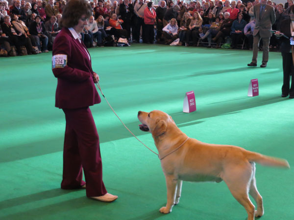 Wait and See Crufts 2012